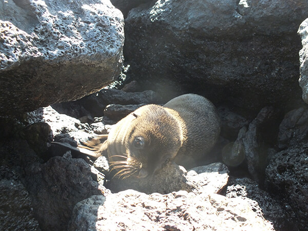 Baby Sea Lions Galapagos Islands G Adventures
