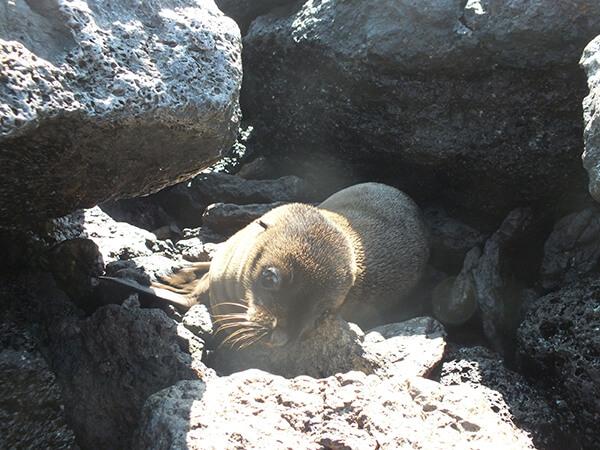 Baby Sea Lions Galapagos Islands G Adventures