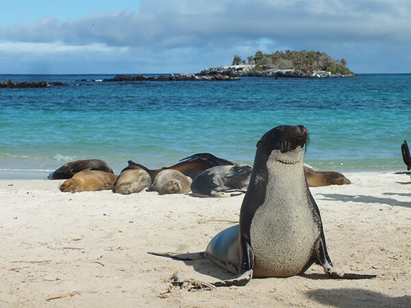 Galapagos Islands, Ecuador With G Adventures