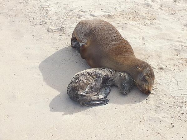 Galapagos Islands G Adventures Sea Lions