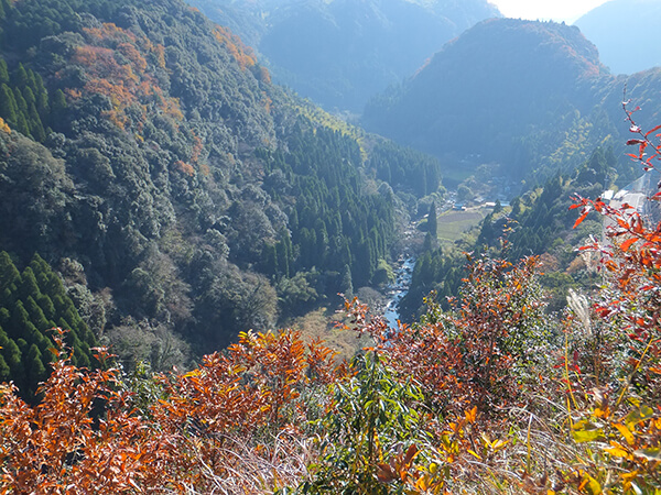 Japan Travel Tips and Reviews