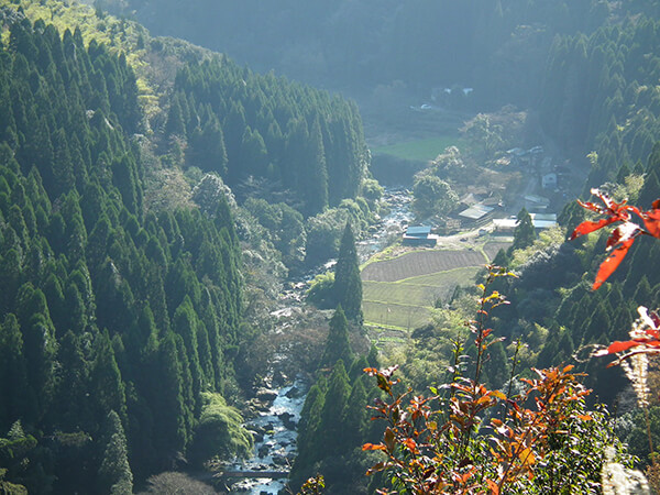Japan Travel Tips